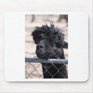 Schwarzes erwachsenes Alpaka - Vicugna pacos Mousepad
