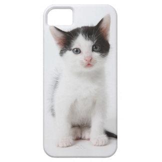 Schwarzes gepunktetes Kätzchen Schutzhülle Fürs iPhone 5