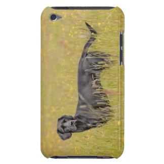 Schwarzes Labrador 16 Monate 2 iPod Case-Mate Case