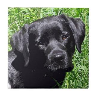 Schwarzes Labrador - Frühlings-Freude Fliese