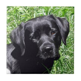 Schwarzes Labrador - Frühlings-Tag Fliese
