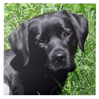 Schwarzes Labrador - Frühlings-Tag Keramikfliese