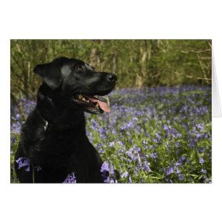 Schwarzes Labrador Karte