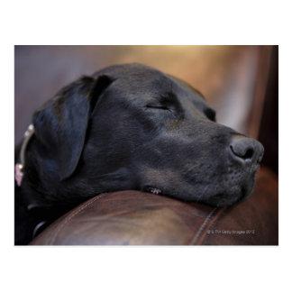 Schwarzes Labrador schlafend auf Sofa, Nahaufnahme Postkarte
