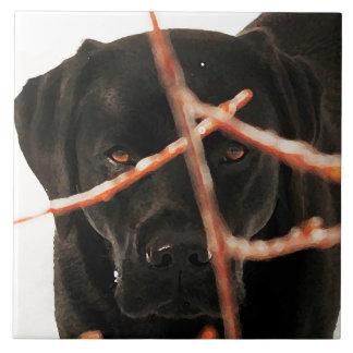 Schwarzes Labrador - Spähen der Niederlassungen Fliese