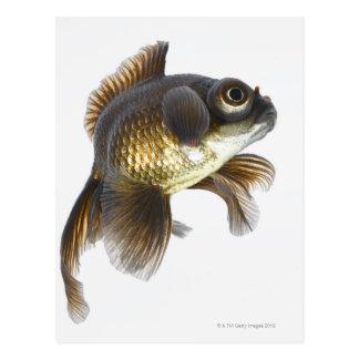 Schwarzes machen Goldfisch (Carassius auratus) 2 Postkarte