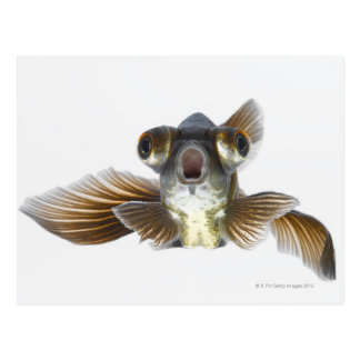 Schwarzes machen Goldfisch fest (Carassius Postkarte