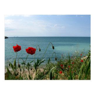 Schwarzes Meer und rote Mohnblumen Postkarte