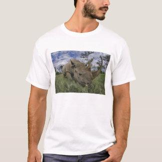 Schwarzes Nashorn, Diceros bicornis, Kenia T-Shirt