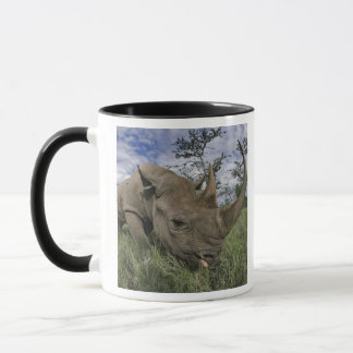 Schwarzes Nashorn, Diceros bicornis, Kenia Tasse