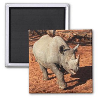 Schwarzes Nashorn-Porträt Quadratischer Magnet