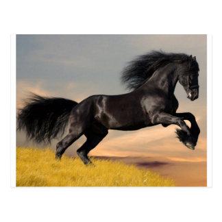 schwarzes Pferd auf Wüste Postkarte