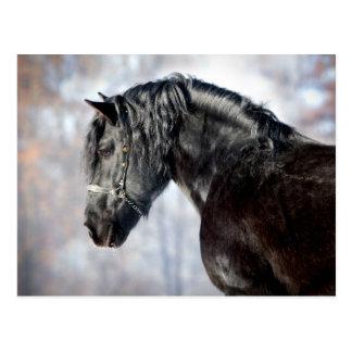 Schwarzes Pferd im Wald Postkarten