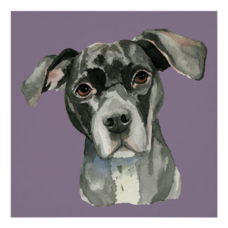 Schwarzes Pitbull-HundeAquarell-Porträt Poster
