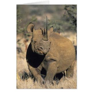 Schwarzes Rhinocerous, (Diceros bicornis), Nord Karte