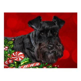 Schwarzes Schnauzer-Weihnachten Postkarten