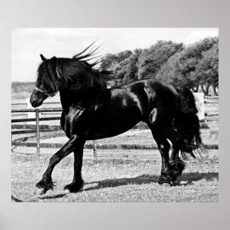Schwarzes Schönheits-Pferd Poster