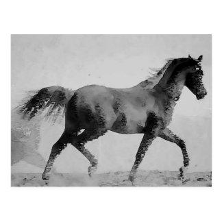 Schwarzes u. weißes gehendes Pferd Postkarte