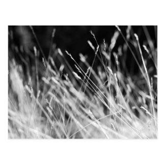 Schwarzes u. weißes hohes Gras Postkarte