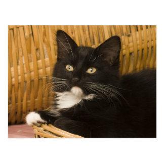 Schwarzes u. weißes kurzhaariges Kätzchen auf Postkarte