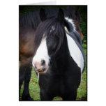 Schwarzes u. weißes Pferd - fertigen Sie Gruß-Kart