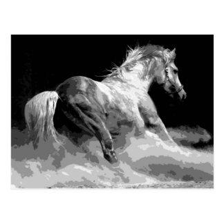 Schwarzes u weißes Pferd in der Aktion Postkarten