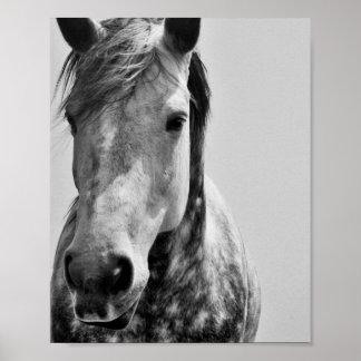 Schwarzes u. weißes Pferd Poster