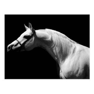 Schwarzes u. weißes Pferd Postkarte