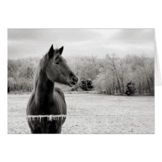 Schwarzes u. weißes Pferdegruß-Karte Grußkarte