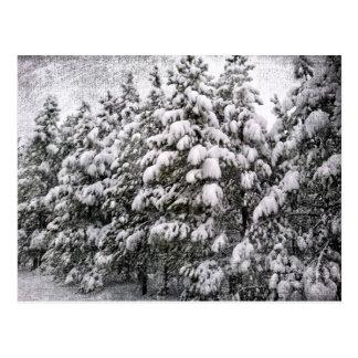 Schwarzes u. weißes Snowscape, Nadelbaum, Co Postkarte