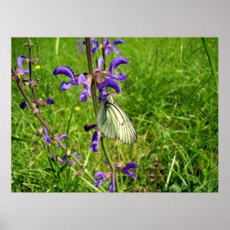Schwarzes Veined weißes Schmetterlings-Plakat Poster