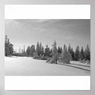 Schwarzwald im Winter schwarz/weiss Poster