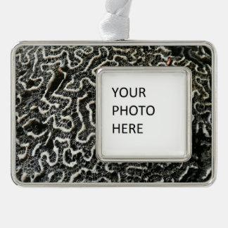 Schwarzweiss-abstraktes Natur-Foto der Korallen-II Rahmen-Ornament Silber