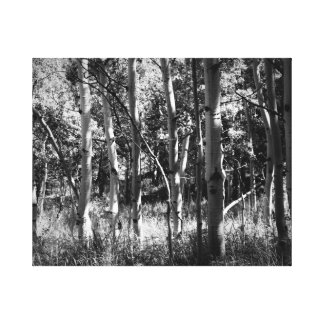 Schwarzweiss-Aspen-Leinwand-Fotografie Leinwanddruck