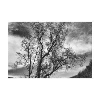 Schwarzweiss-Baum-LandschaftsFoto Leinwanddruck