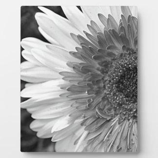 Schwarzweiss-Blume Fotoplatte