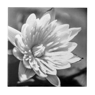 schwarze lilie fliesen schwarze lilie keramikfliesen. Black Bedroom Furniture Sets. Home Design Ideas