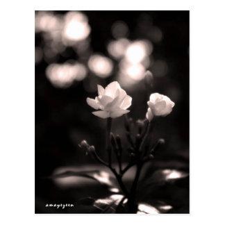 Schwarzweiss-Blume mit bokeh Postkarte