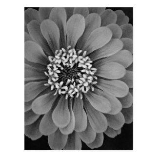 Schwarzweiss-Blumen-Foto Postkarte