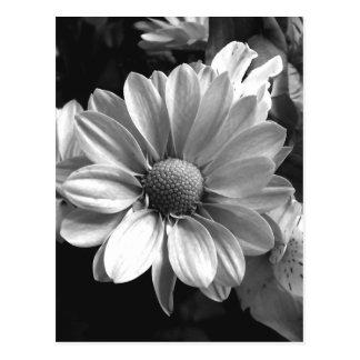 Schwarzweiss-Blumen-Foto Postkarten