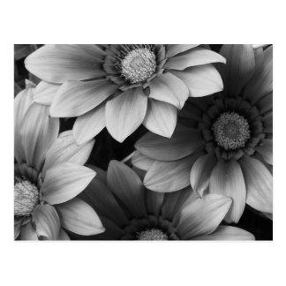 Schwarzweiss-Blumen Postkarte