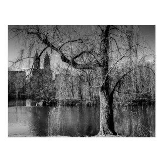 Schwarzweiss-Central Park-New- Yorklandschaft Postkarte