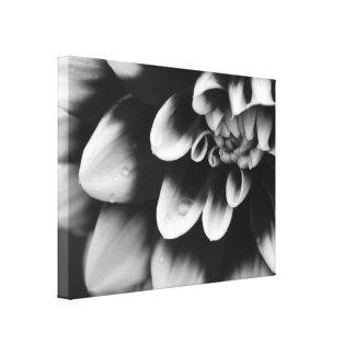 Schwarzweiss-Dahlie-Blumen-Blüte Leinwand Drucke