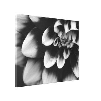 Schwarzweiss-Dahlie-Blumen-Blüte Leinwanddruck