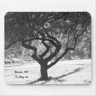 Schwarzweiss-Foto: Baum in Bronx NY Mauspad
