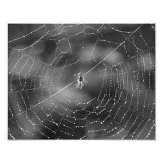 Schwarzweiss-Fotografie einer Spinne und des Foto Drucke