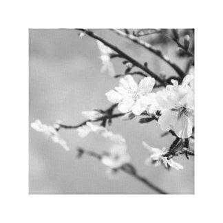 Schwarzweiss-Frühlings-Kirschbäume Leinwanddruck