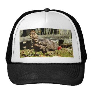 Schwarzweiss-Huhn durch Zaun Trucker Cap