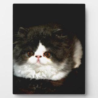 Schwarzweiss-Kätzchen Fotoplatte