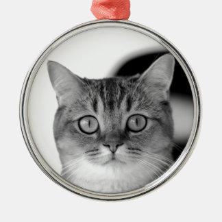 Schwarzweiss-Katze, die gerade Ihnen betrachtet Rundes Silberfarbenes Ornament
